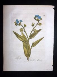 Woodville 1810 Hand Col Botanical Print. Cynoglossum Officinale 109